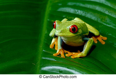 Tree Frog Sitting On Leaf