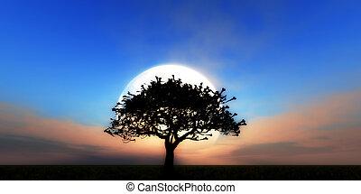 tree full moon day