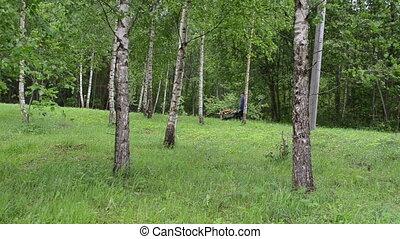 tree gardener firewood