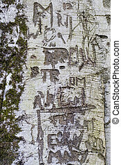 Tree Graffiti 2
