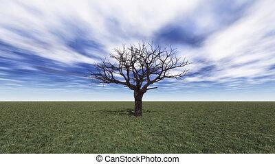 tree grow