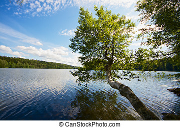 Tree Growing Above Lake - Lonely tree growing away from the...