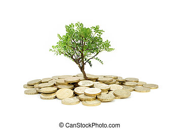 Tree growing from money - Tree growing from a pile of coins