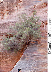 tree growing in stone from Petra