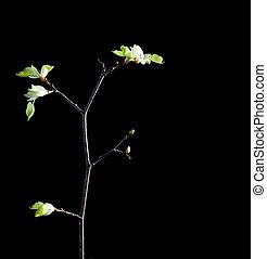 tree growing on black background.