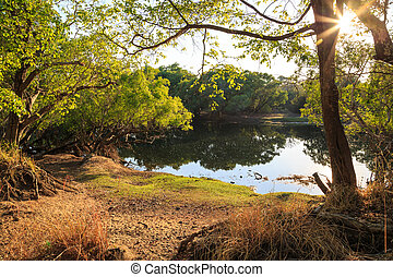 Tree growing on the bank of a lake