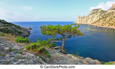tree growing on the slope of the mountain - pine tree...