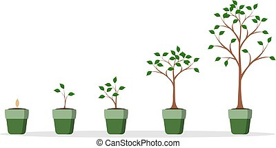Tree growing set. Green plant in the pot on white.