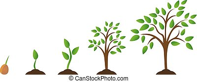 Set of illustrations with phases plant growth - Tree growth...