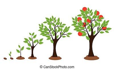 Tree Growth - Vector illustration of tree growth diagram...
