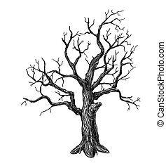 Tree - Hand drawn leafless tree on white background
