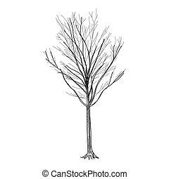 Tree - Hand Drawn vector