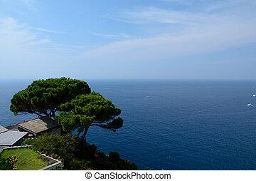 Tree high over sea in Riomaggiore