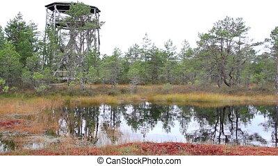 Tree house found near the bog swamp marsh land