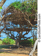tree house on the ocean shore