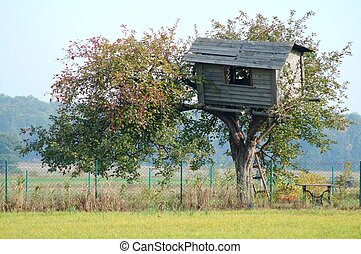 Tree House - Old tree house