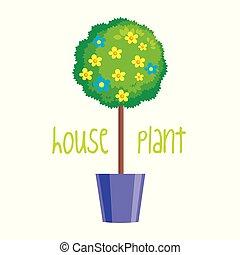 House plant on white background