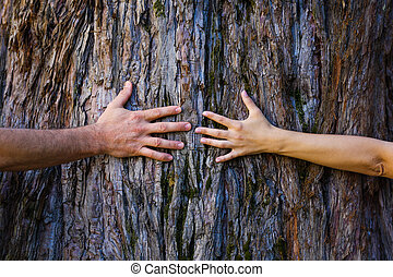 Tree hugging - Men's and woman's hands hugging a tree
