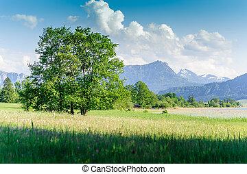 Tree in a austrian summer landscape, taken in salzkammergut