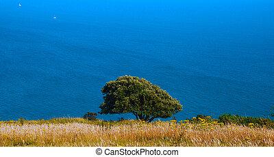 tree in a field against sea