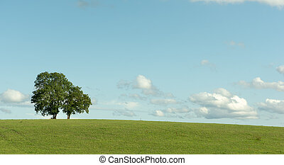Tree in a field on blue sky