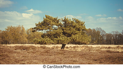 Tree in a field with flowering