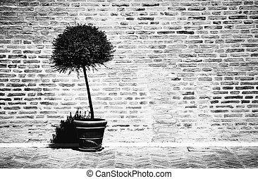 Tree in a flowerpot