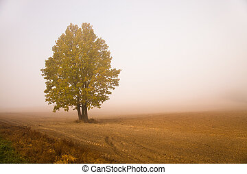 Tree in a fog - Tree growing on the plowed agricultural...