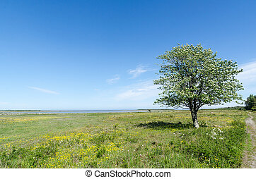 Tree in a green and bright coastland by springtime - Tree in...