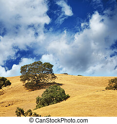 Tree in a green field landscape