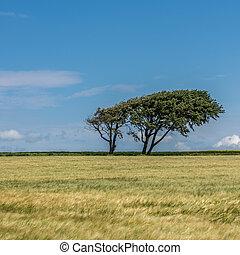 Tree in a green field
