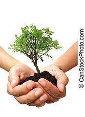 Tree in a hand - Hand holding a small bonsai tree