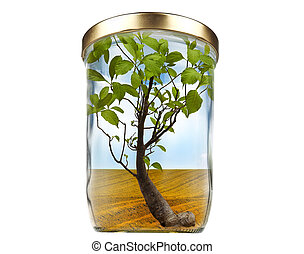 Concept for growing, ecology or zero waste - Tree in a jar,...
