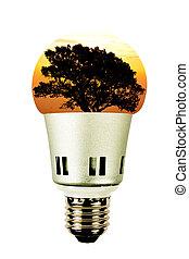 Tree in a lightbulb.