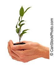 Tree in a male hands isolated on white background