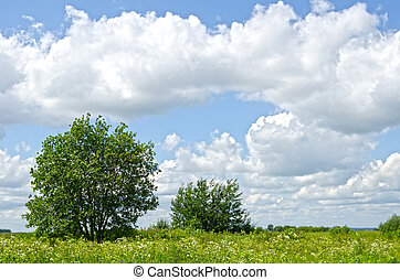 Tree in a meadow on nice summer day