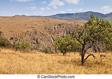 Tree in a mountain landscape