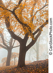 Tree in a park at foggy morning beautiful autumn colors
