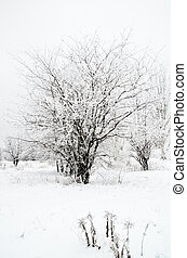 tree in a snow