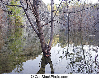 Tree in a water