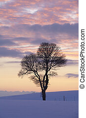Tree in a winter landscape at sunset