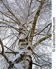 Tree in a winter scene.