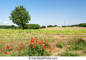 Tree in agricultural landscape