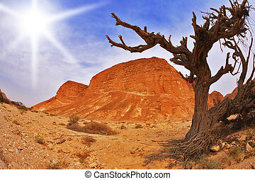 Tree in ancient mountains