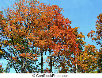 Tree in autumn colors