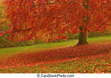 autumn - tree in autumn