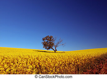 Canola Field - Tree in Canola Field
