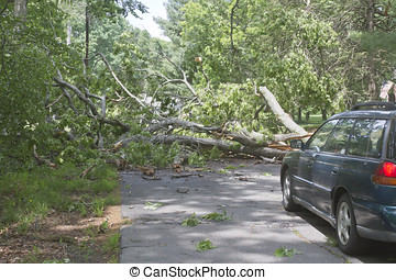 Tree in Cars Way - Car driving along a road is blocked by a...