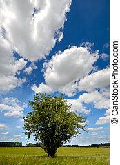 Tree in corn field blue sky, clouds
