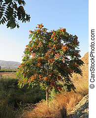 Tree in countryside